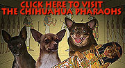 The Chihuahua Pharaohs